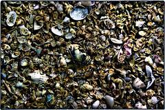 ... SDIM2714 (*melkor*) Tags: art experiment conceptual minimal macro seashell seashells nature ground soil stilllife aseashellscarpet anabstractnatureproject casual casuality dead dark colors colours seaside beach trashbit geotagged melkor