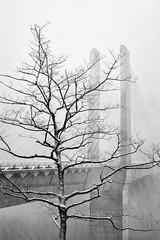 out like a lion (StephenCairns) Tags: bridge winter blackandwhite bw snow tree japan concrete spring snowstorm  gifu      stephencairns outlikealion