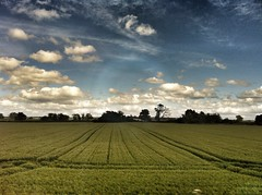 A cross the green field, past the line of trees (Broo_am (Andy B)) Tags: life lighting flowers light england sky sun white plant black art window beautiful up leaves weather clouds garden lens manchester evening amazing exposure day skies shadows close view natural cloudy unique gorgeous awesome centre details extreme everyday storms iphone bokher iphonegraphy iphoneography instagram instagood instamood amazingbeautifulawesomeprettyglorious stormdaycloudyclearblue