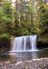 Sunbeam Delight (TheOtter) Tags: cliff sunlight tree green water rock oregon waterfall lush upperbuttecreekfalls