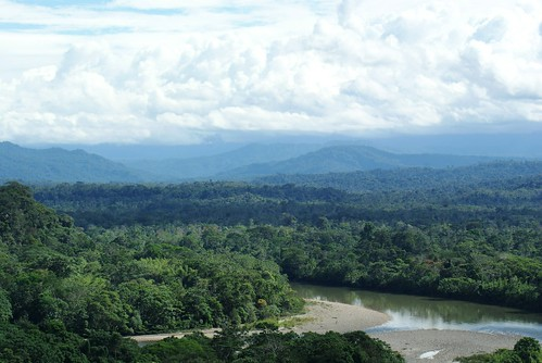Ecuadorian Amazon rain forest, looking toward the Andes