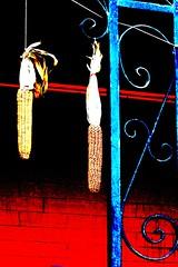 Corn (navejo) Tags: canada corn quebec plateau montreal balcony ironwork navejo