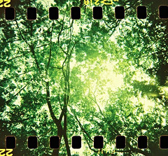 Tall Trees (mayrpamintuan) Tags: ocean trees sea summer vacation sky sun mountain mountains hot green film beach nature water leaves analog 35mm island photography islands photo leaf high lomo lomography sand warm waves fuji hole weekend top philippines grain lofi saturday sunny holes adventure virgin heat cebu filipino grains analogue grainy sumi fujichrome provia blackbird pilipino pinoy lowres pilipinas trl sprocket pinas sprockets lowfi beac sumilon blackbirdfly pilipinastarana itsmorefuninthephilippines