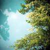 (*YIP*) Tags: newzealand holiday plant green 120 6x6 film nature mediumformat square outdoors photography day kodak epson kiev kiev60 yip iso160 v500 southislandnewzealand yipchoonhong