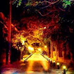 Street light (Alkioni) Tags: street summer night greece kifissia