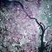 Washington and Virginia Suburbs (False Color Satellite View)