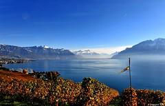 Splendeurs de Lavaux (Diegojack) Tags: eau lac vignes paysages vevey lavaux mfcc