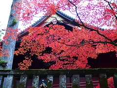 Scarlet-tinged maple leaves at the Buddhism temple