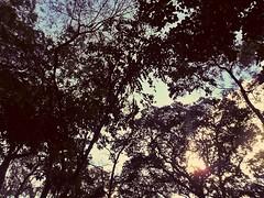 sunlight (B. Messias) Tags: blue brazil tree sol azul brasil vintage dark photography twilight paradise blu céu árvore goiânia goiás