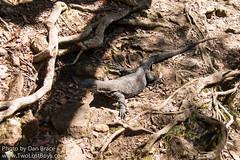 Kondalilla National Park (Disney Dan) Tags: travel spring australia qld queensland april avril sunshinecoast montville australasia oceania 2016 kondalillanationalpark