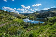 sur les rives du Douro (daumy) Tags: portugal nature water montagne landscape eau culture bleu ciel nuage paysage escalier vigne raisin verdure fleuve viseu vilaseca viticole nikonflickraward