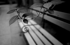 bench and leaves (N.sino) Tags: leaves bench    xpro1  xf23mmf14r