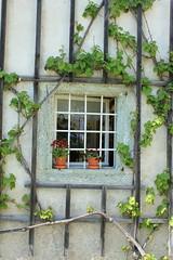 Bled Window (emi.archer) Tags: plants window slovenia bled slovenija fentre plantes slovnie bledlake lacdebled