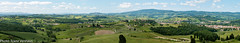 160524_Certaldo-751901-Pano (FranzVenhaus) Tags: trees italy green castles forest towers it vineyards tuscany fields wildflowers toscana certaldo oldtowns
