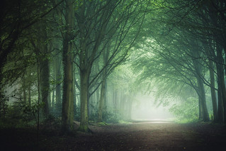 Bacton Wood 04/06/2016