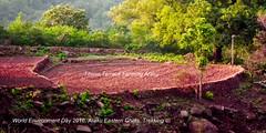 Titanicterrace-farming--copy (prem swaroop) Tags: field titanic cultivation tilling kodu resemblance terracing terracefarming