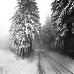If someone dreams (ArztG.|Photo) Tags: road trees winter light white snow austria mood magic atmosphere dreams myfavs arztg|photo