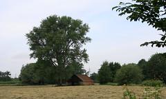 07-IMG_2527 (hemingwayfoto) Tags: baum ernte gleidingen gras heu heuernte laatzen landwirtschaft natur ortsteil panther regionhannover scheune schuppen wiese