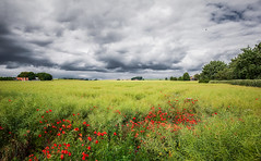 Meadow (Appe Plan) Tags: flowers trees sky house lund green nature colors field grass clouds landscape countryside skne nikon soft colours view sweden meadow crop appe d700