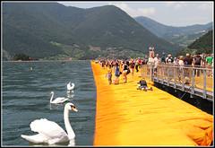 The Floating Piers...I cigni (Maulamb) Tags: thefloatingpiers passerella cigni lagodiseo christo