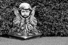 Garden cherub (JWY80) Tags: travel italy rome roma statue angel nikon catholic cherub d750 lazio 24120mm latium vaticangardens avemariauniversity