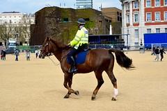 England 2016  London  Brown horses go to the police (Michiel2005) Tags: uk greatbritain england horse london unitedkingdom britain police engeland changingoftheguard londen paard horseguards polis politie vk beredenpolitie grootbrittanni verenigdkoninkrijk
