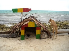 "El único habitante de Haynes Cay • <a style=""font-size:0.8em;"" href=""http://www.flickr.com/photos/78328875@N05/6869202884/"" target=""_blank"">View on Flickr</a>"