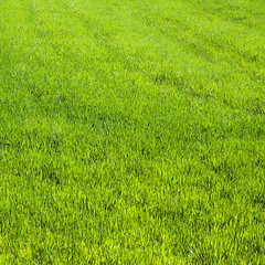 Verde (Mr.Groka (Gorka Valencia)) Tags: verde araba hierba paísvasco álava izki parquenaturaldeizki