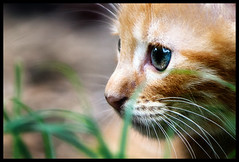 Cat's Eye (Marvin Foran Photography) Tags: