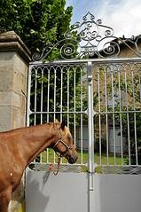 Tristesse ... Horse . (Dubus Laurent) Tags: portrait horse tree nature animal garden cheval gris nikon jardin grille animaux arbre porche hdr barriere brun fer entre chevaux d90 animalier
