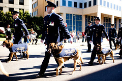 canine march (liipgloss) Tags: newcastle army march navy diggers anzac soilders civicpark