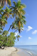 pigeon point, tobago (Jennie Filer Photography) Tags: sea beach nikon tropical april caribbean pigeonpoint tobago trinidadtobago westindies d90 nikond90