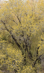 Spring foliage (Murat Tekeev) Tags: tree green leaves yellow landscape spring stem scenery branch view foliage arbor trunk bough leafage bole