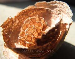 Small wasp nest (Mi Ko) Tags: lost flickr fuji wasp nest little von innen destroyed x10 zerstrt wespe wespennest
