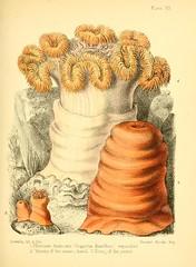 aquariums freshwaterbiology history marinebiology mblwhoilibrarywoodshole bhl:page=11017667 dc:identifier=httpbiodiversitylibraryorgpage11017667 anemone