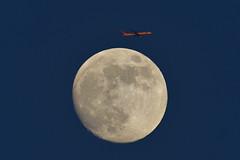 JAL  B777-300 (bbw1150) Tags: moon airplane jal haneda hnd b777 rjtt