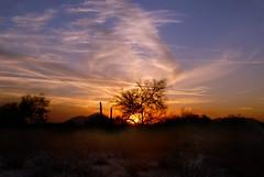 sonoran winter sunset 1106-01 _ scottsdale, arizona (meg99az) Tags: sunset arizona phoenix scottsdale d200 sonorandesert paloverde pimasaltriver