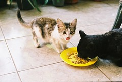 :-9 (yttria.ariwahjoedi) Tags: cute film home animal tongue analog cat canon furry ae1 kitty eat snack bandung neighbour