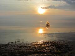 Rock Splashes (217/366) (Estrella con Musica) Tags: life friends sunset lake reflection love wet water rock explore memory laugh oysters splash meteor fleeing favoriteplace bigdog pleasehelp makingmemories explored notameteor clickl dontknowwhatthatis