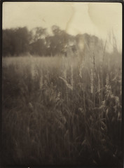 (NooFZz) Tags: bw landscape 9x12 photographicpaper aplanat paperpositive bulldog4x5