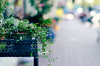 Welcome (Preappy) Tags: floral 50mm store dof play display bokeh sidewalk bokehlicious bokerama nikond7000 preappy