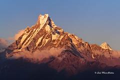 Machapuchare (Fishtail), Nepal (Loco Moco Photos) Tags: nepal trekking holy climbing sacred summit shiva annapurna himalayas fishtail machhapuchhre machapuchare jimmyroberts wilfridnoyce