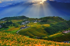 The Rays at Mt. Sixty Ton (Vincent_Ting) Tags: sky taiwan daylily  formosa  sunrays  hualian    hemerocallisfulva      clousd