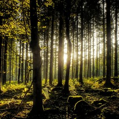 Low sun in the forest. (Eric Goncalves) Tags: autumn trees light sunset sun fern tree green nature forest landscape evening landscapes moss glow shadows natureza dean gloucestershire rays ferns autumnal treescape sunsetting array forestofdean wye wyevalley wyeriver ericgoncalves
