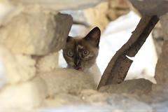 Gatita fea (Patones) (rosa casi roja) Tags: cat gatos gato