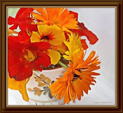 nasturtiums watercolor (edenseekr) Tags: flowers orange fall yelow nasturtiums digitallypainted
