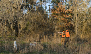 Private Alabama Quail Hunting - Davis Quail 35