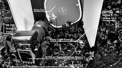 Setup shot for week 16 - Pastels (Cjlws) Tags: light flower macro garden grey nikon sigma os tent card 600 setup 28 bluebell sb cls 105mm d700 sb700 cjlws