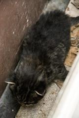 20160429_PhotographyPractice_0050_4x6 (Creativeleigh Shot...by LeighAnneD) Tags: cats cat feline outdoor kittens neighborhood litter felines
