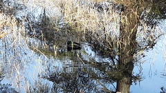20160331_091404 (ks_bluechip) Tags: creek evans trails preserve sammamish usa2106